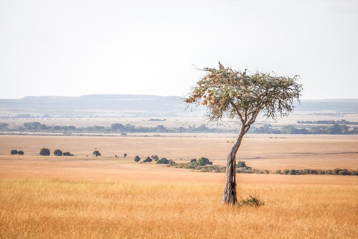 Kenia