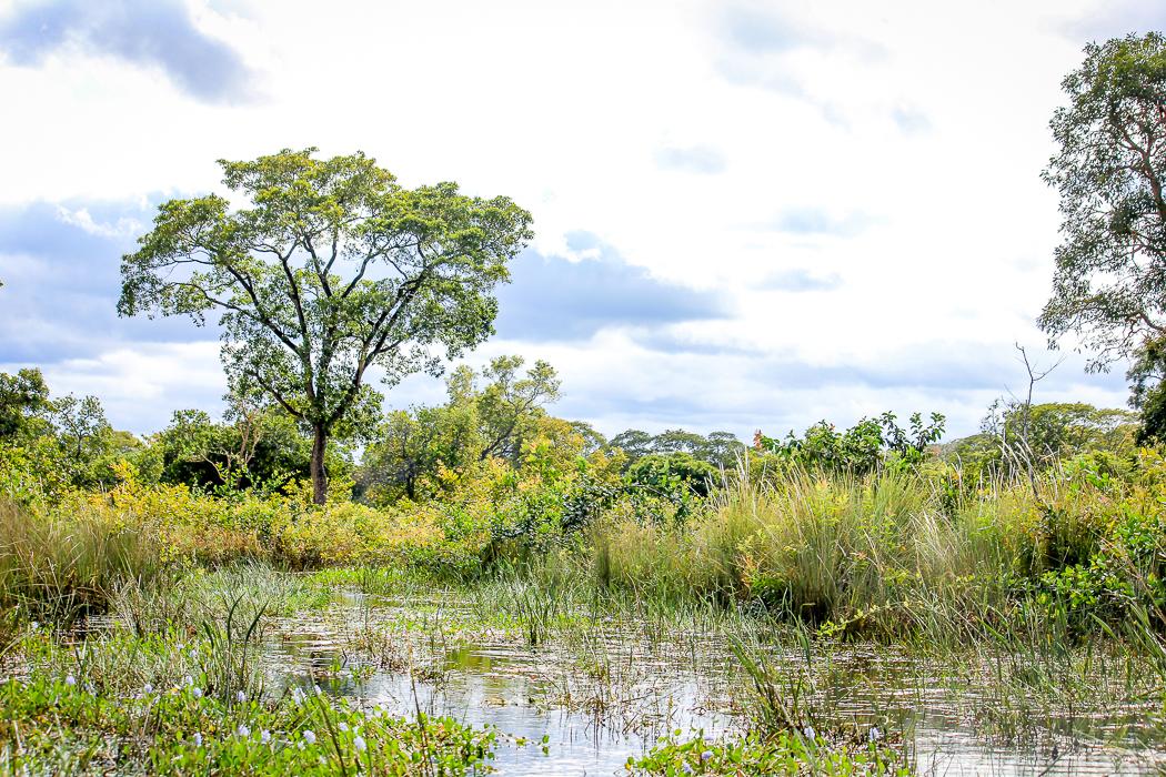 IMG_2173_pantanal