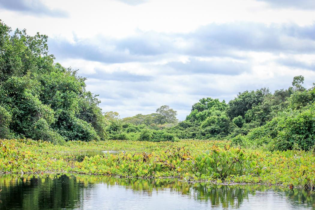 IMG_2178_pantanal