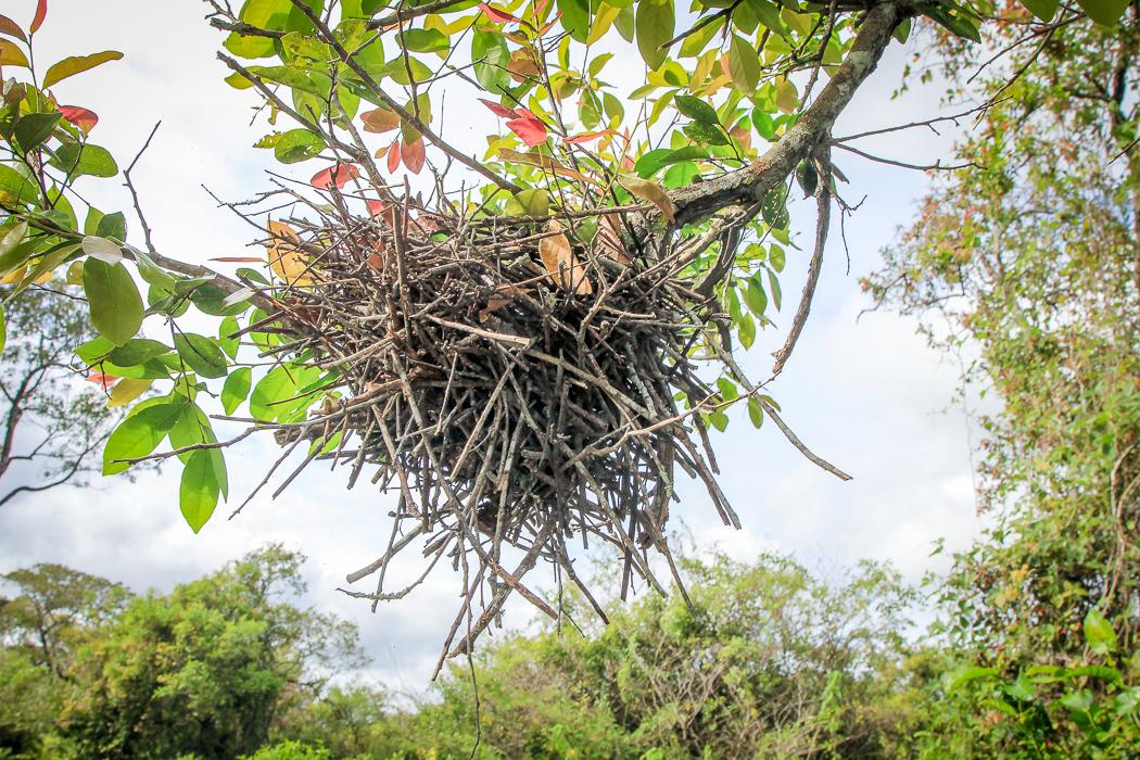 IMG_2182_pantanal