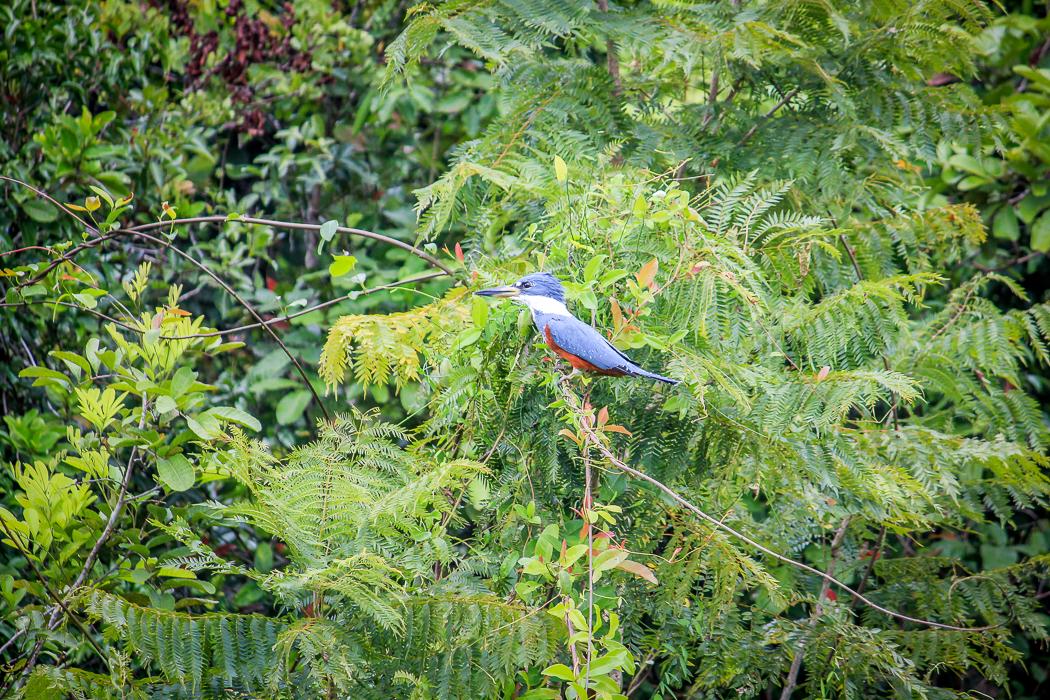 IMG_2212_pantanal