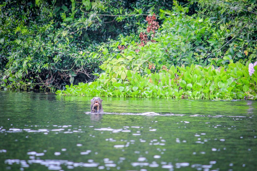 IMG_2222_pantanal