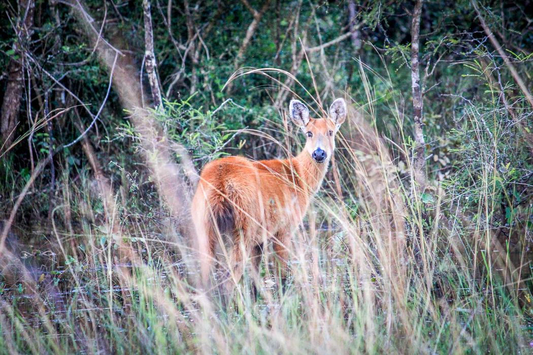 IMG_2274_pantanal