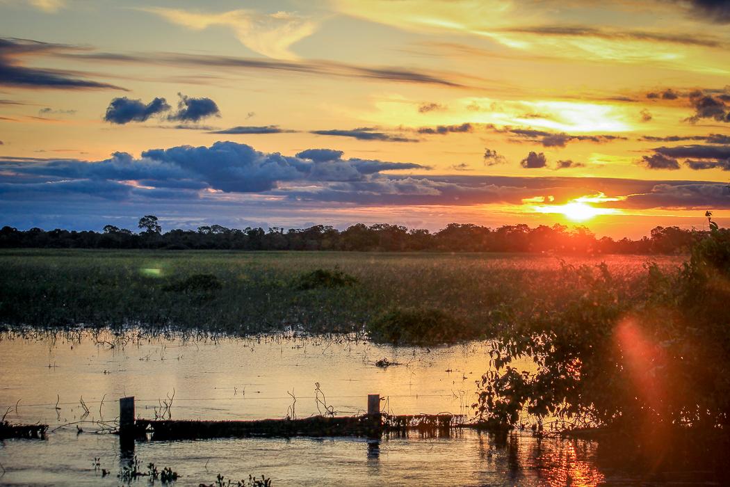 IMG_2275_pantanal
