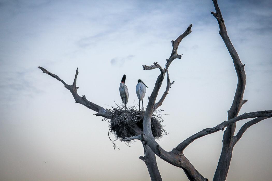 IMG_2281_pantanal