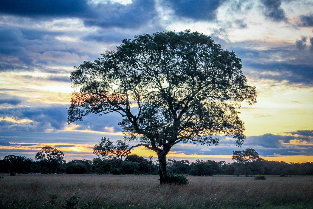 IMG_2288_pantanal