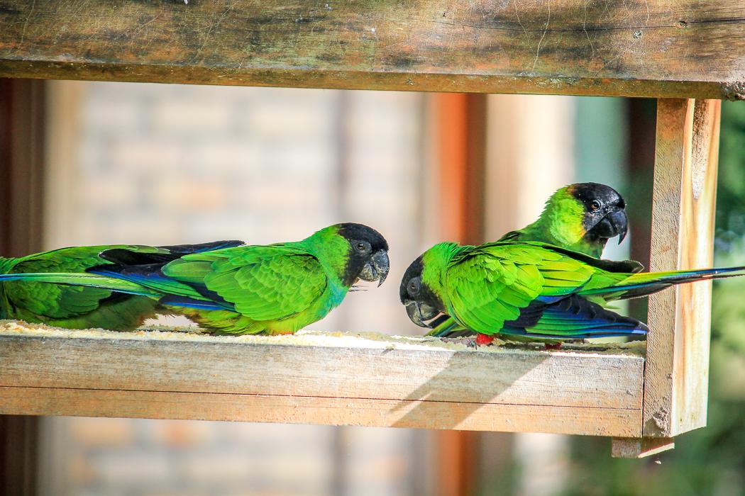 IMG_2299_pantanal