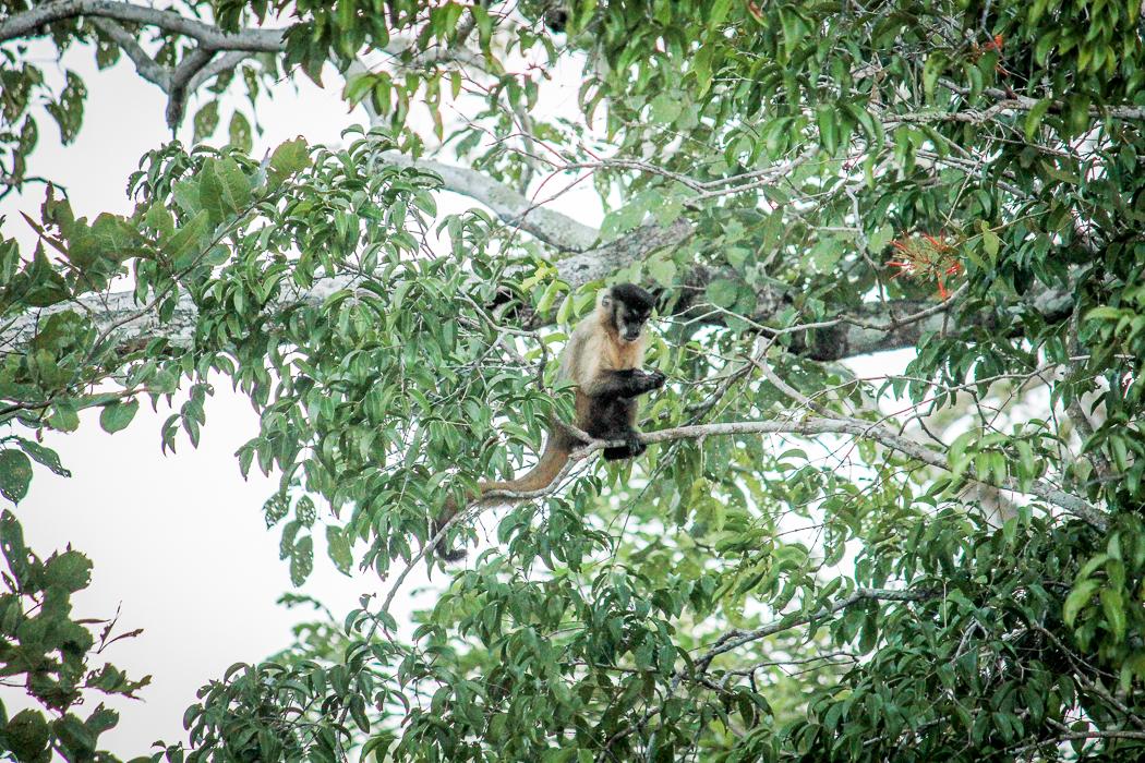 IMG_2400_pantanal
