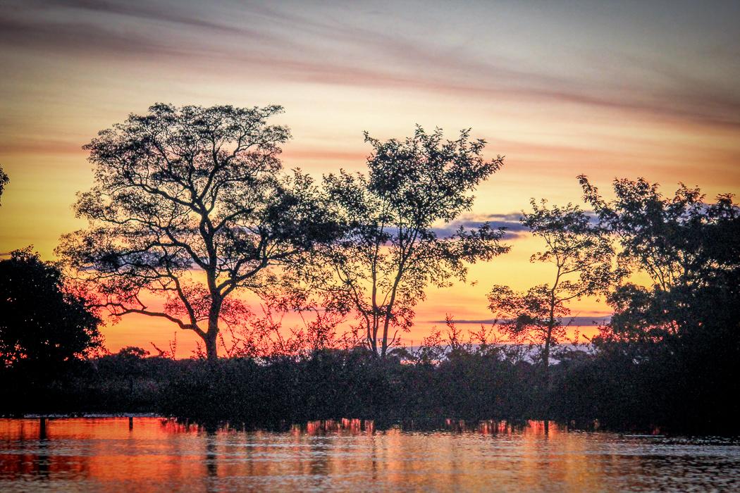 IMG_2419_pantanal
