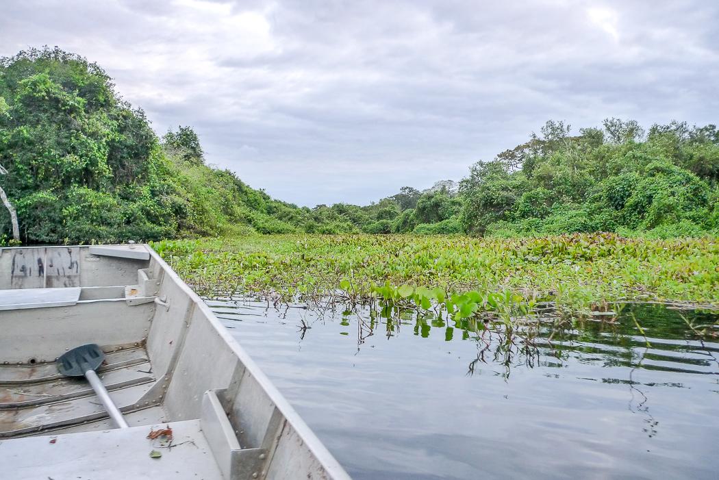 P1090863_pantanal