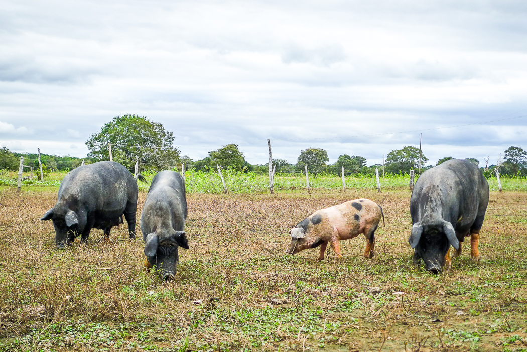 P1090880_pantanal