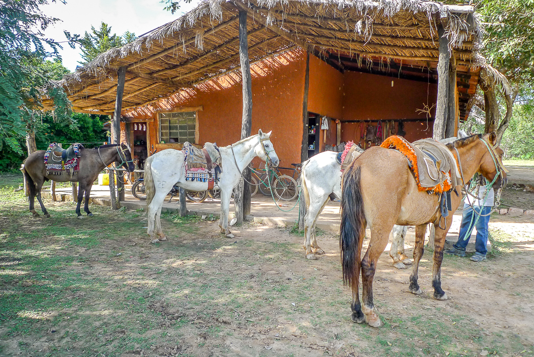 P1090894_pantanal
