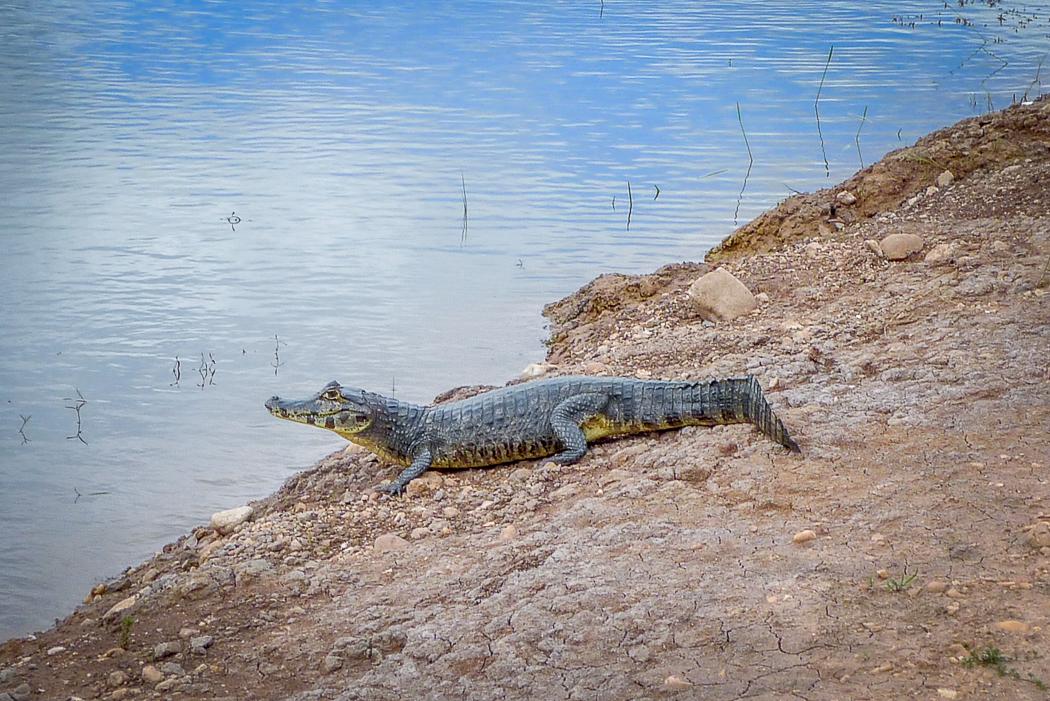 P1090920_pantanal-2