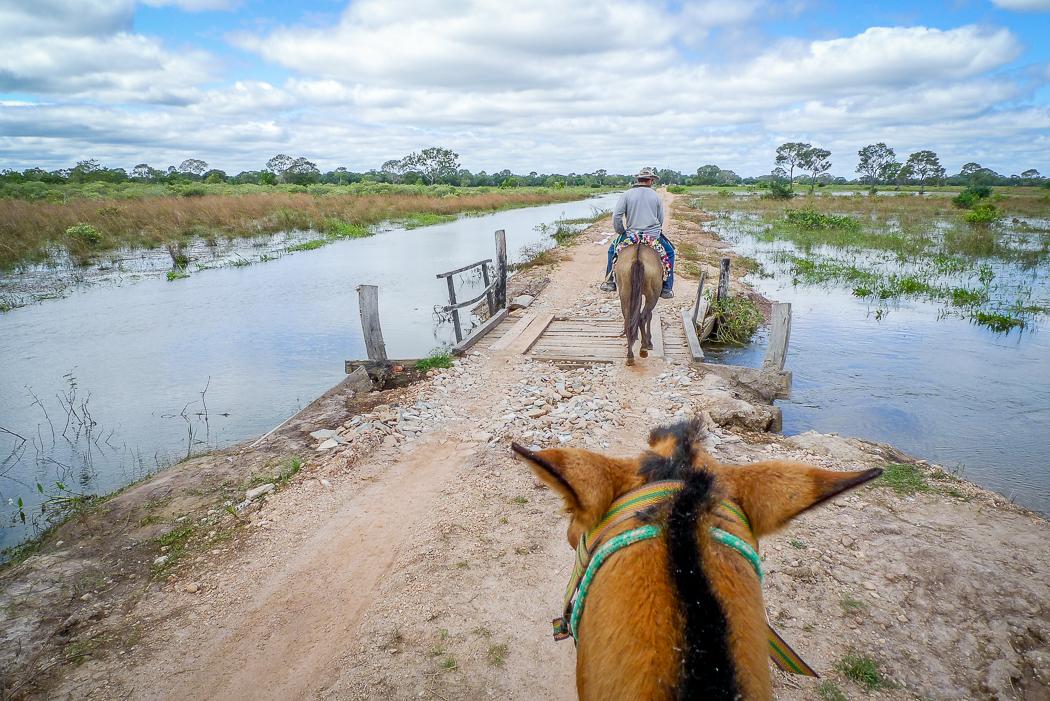 P1090923_pantanal-2