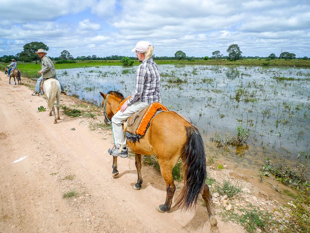 P1090939x_pantanal