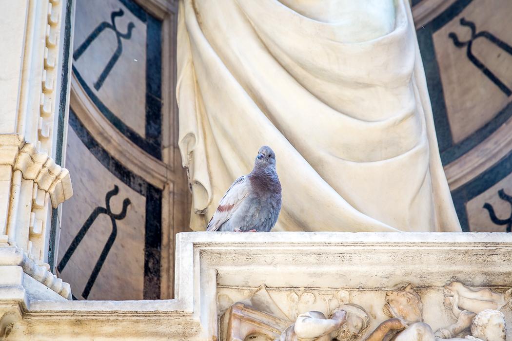 IMG_8304_toscana