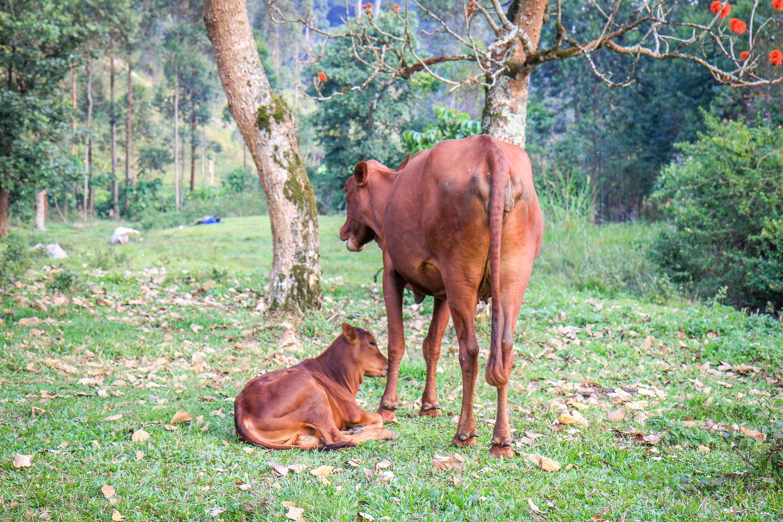 IMG_4917_uganda