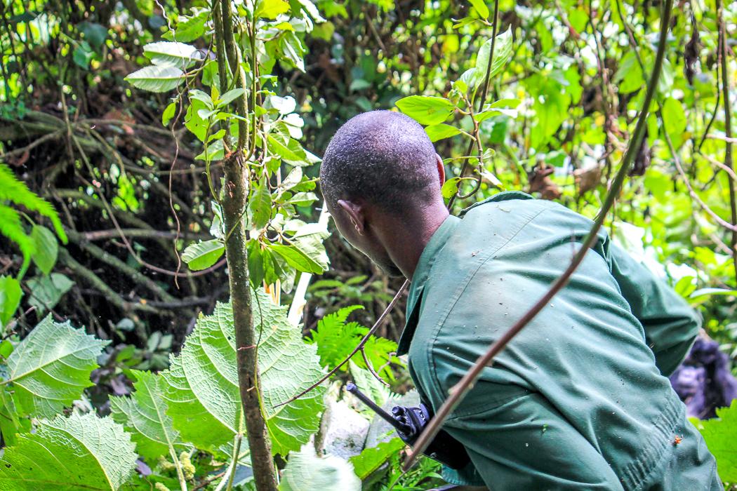 IMG_5146_ruanda
