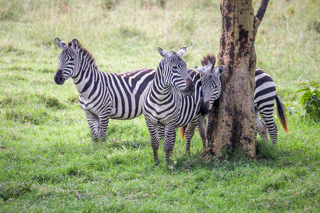 IMG_5432_Kenia