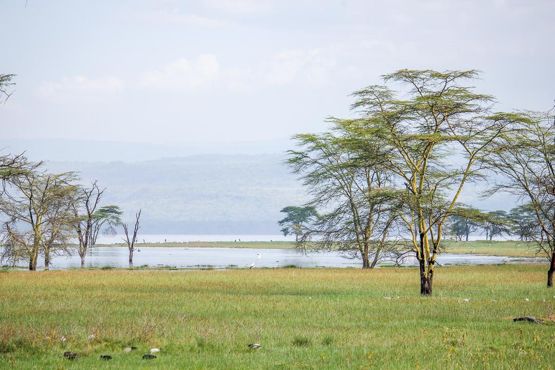 IMG_5446_Kenia