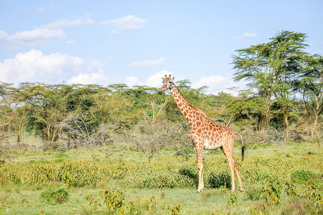 IMG_5556_Kenia