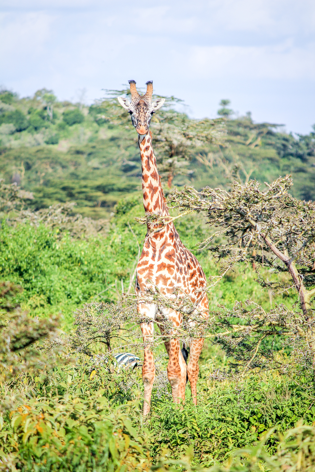 IMG_5567_Kenia