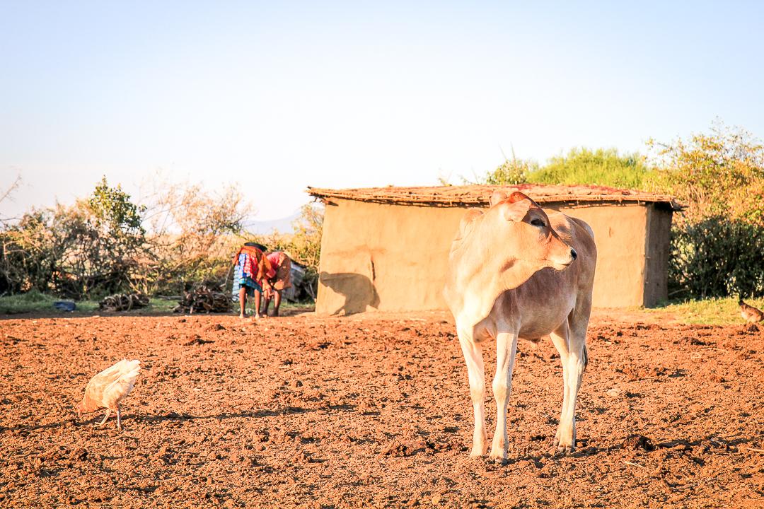 IMG_6221_Kenia_Masai Mara
