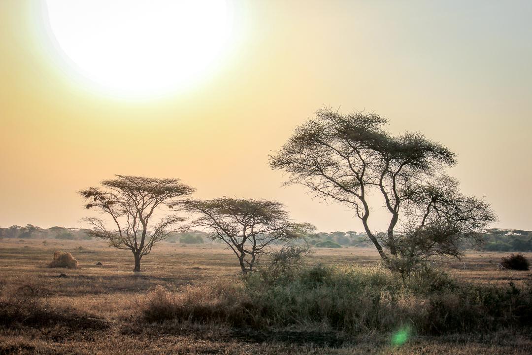IMG_6449_Tansania