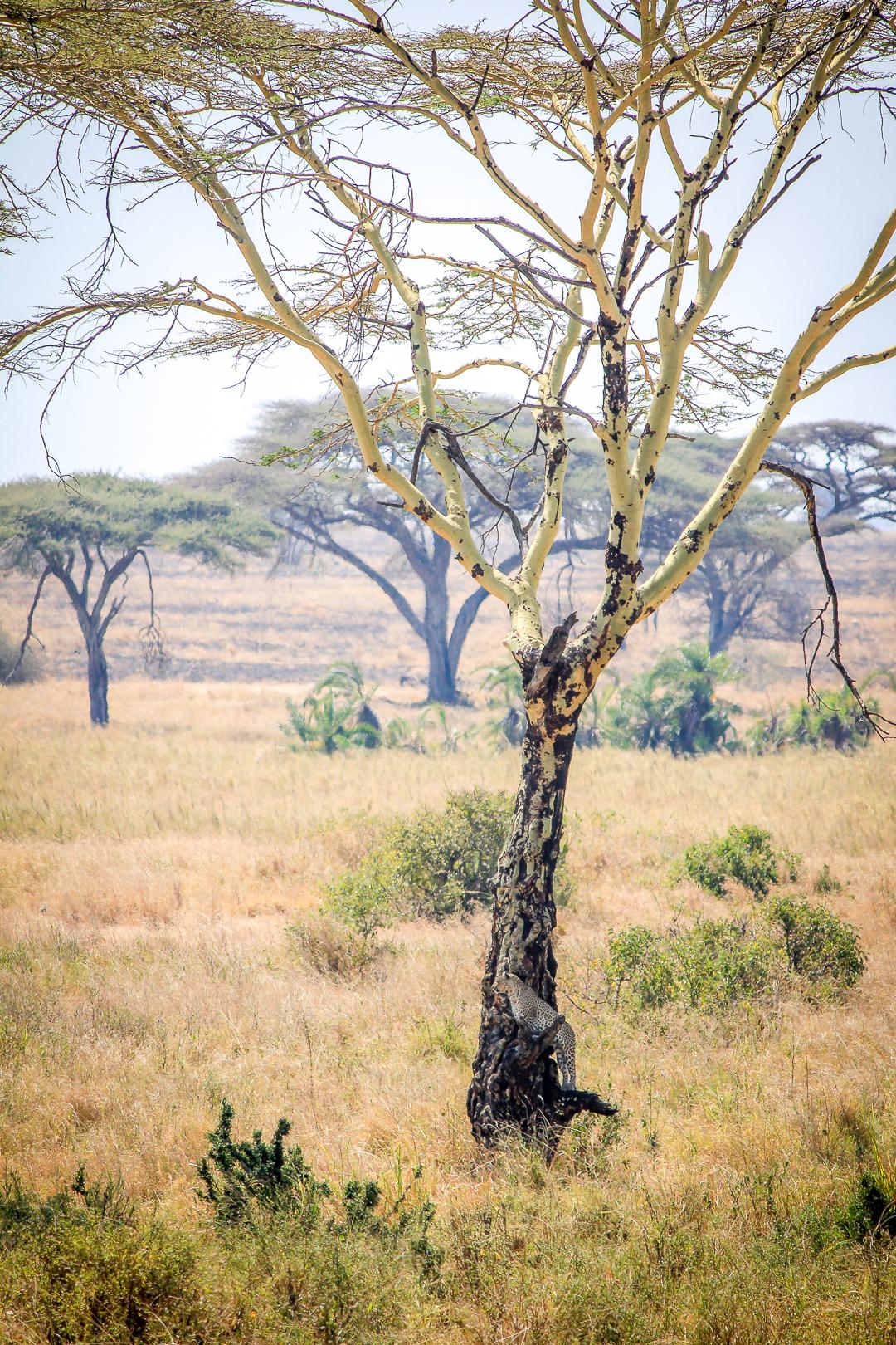 IMG_6582_Tansania