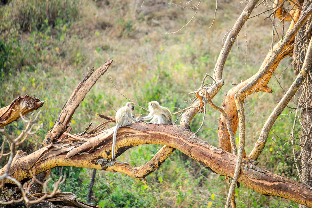 IMG_6734_Tansania