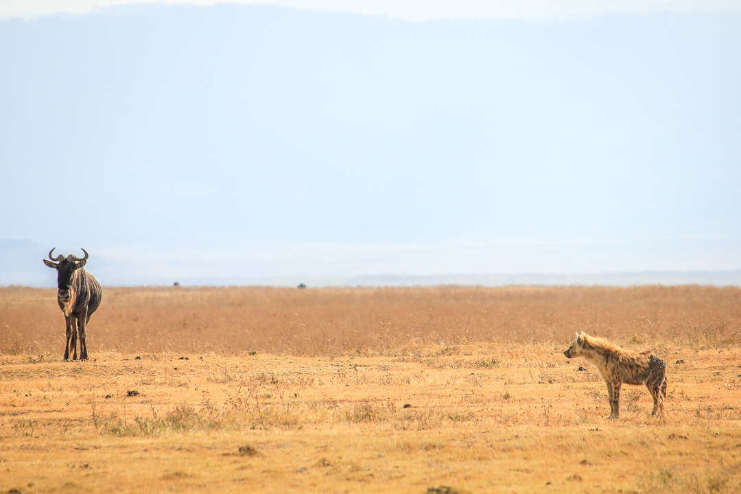 IMG_6737_Tansania