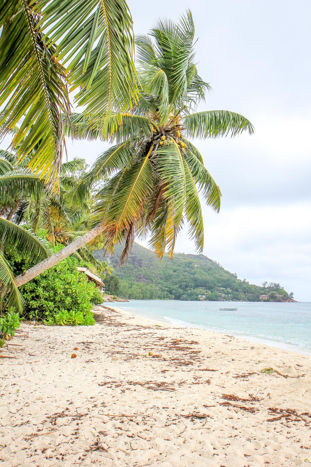 IMG_6845_Seychellit