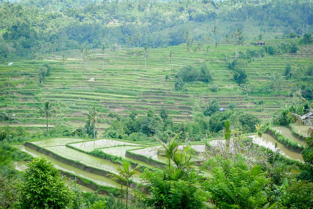 P1030036_Bali