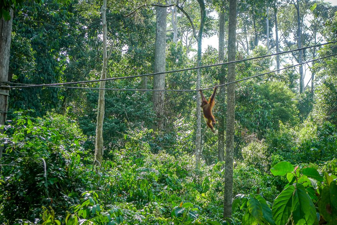 P1030243_Borneo
