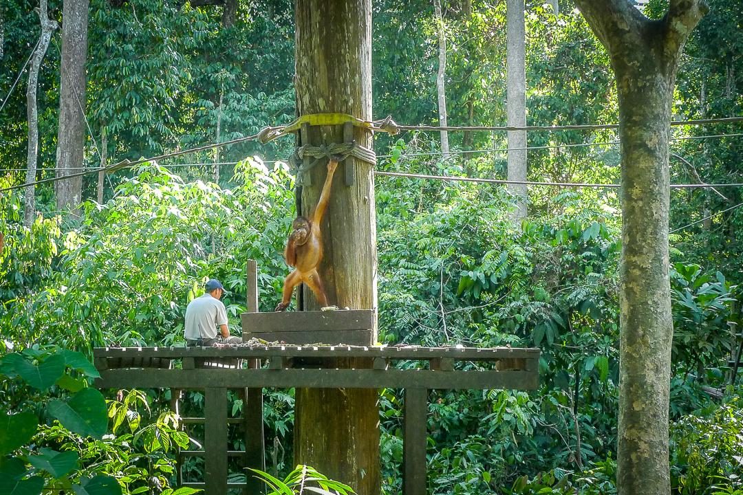 P1030271_Borneo