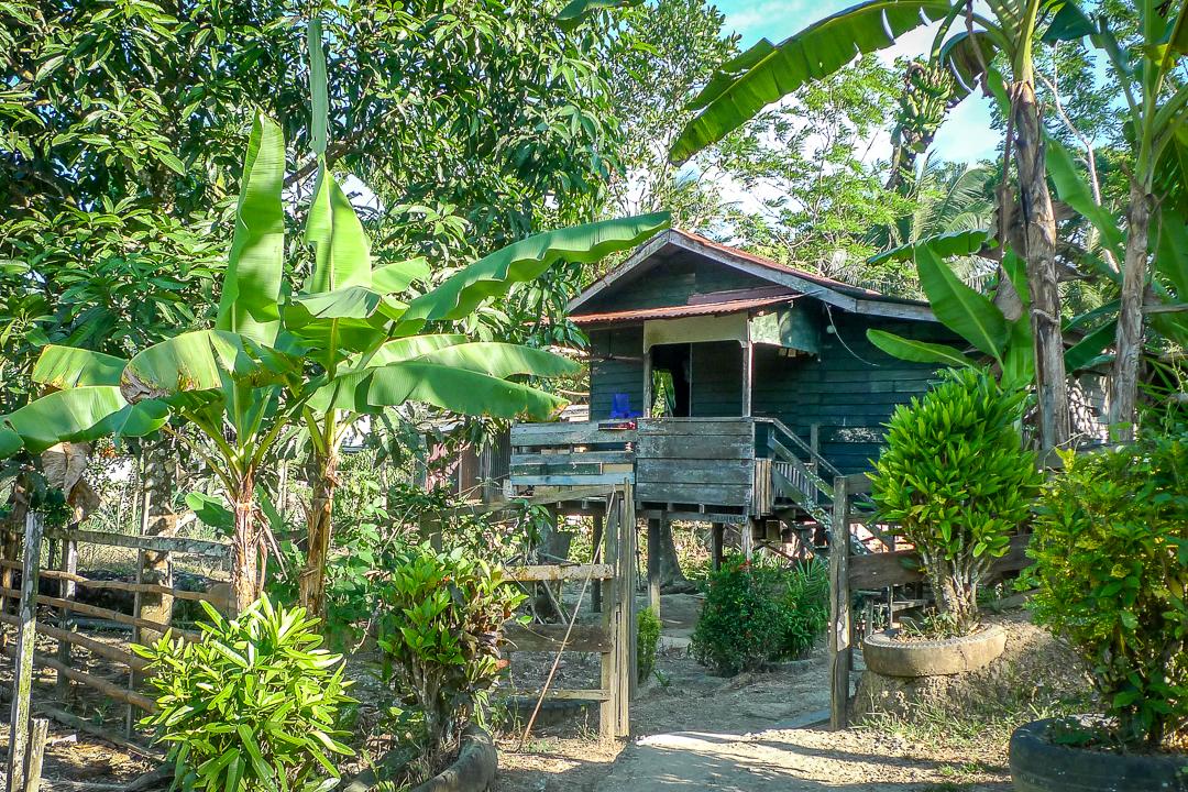 P1030274_Borneo