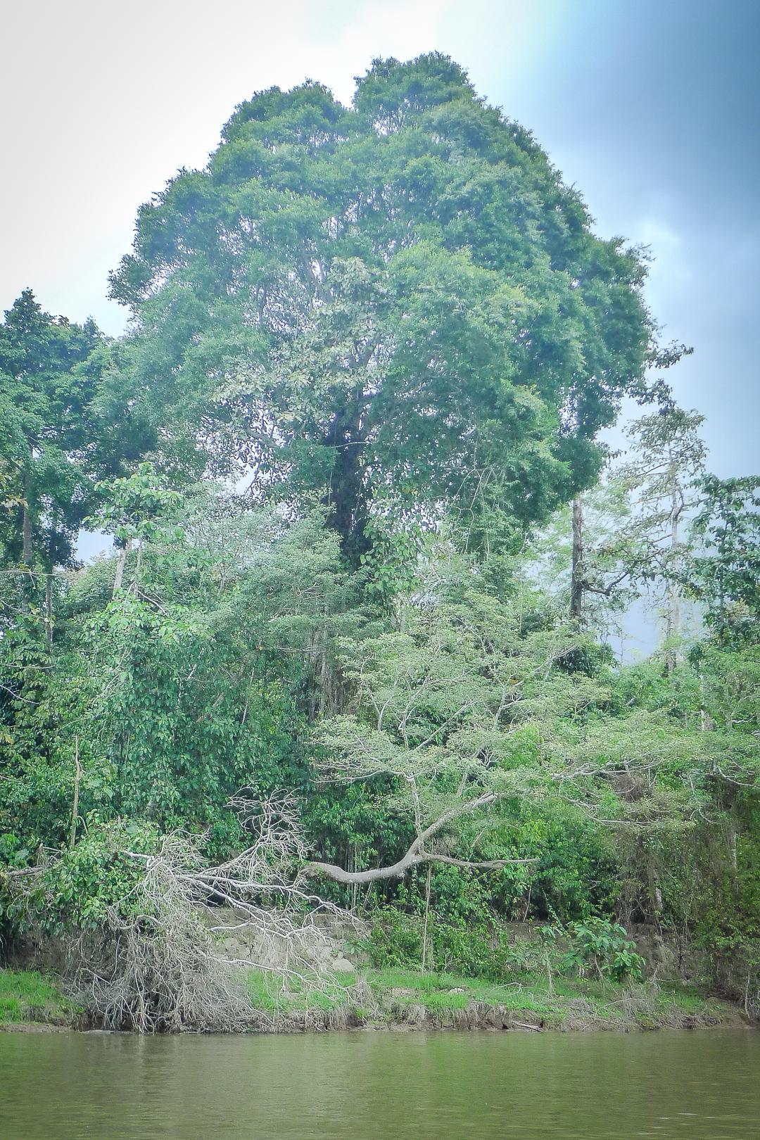 P1030561_Borneo