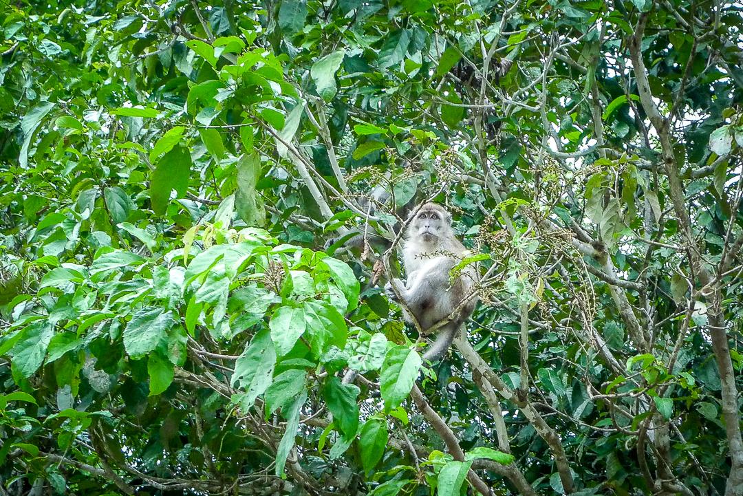 P1030615_Borneo