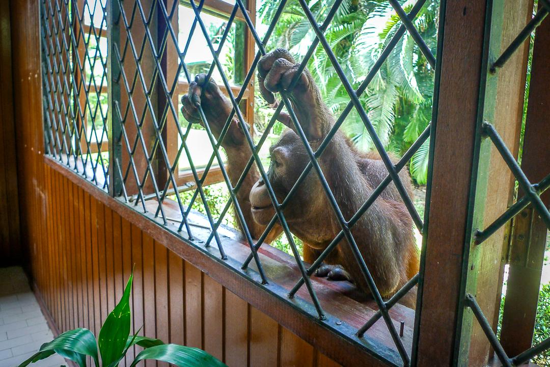 P1030714_Borneo