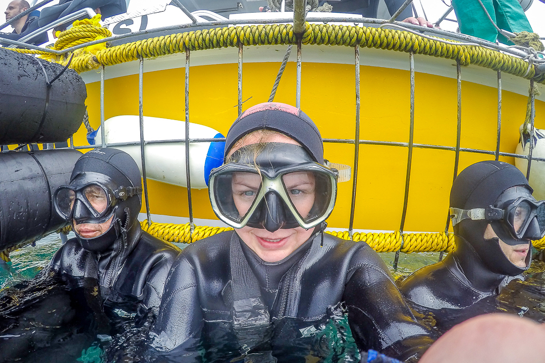 Cage Diving in South-Africa