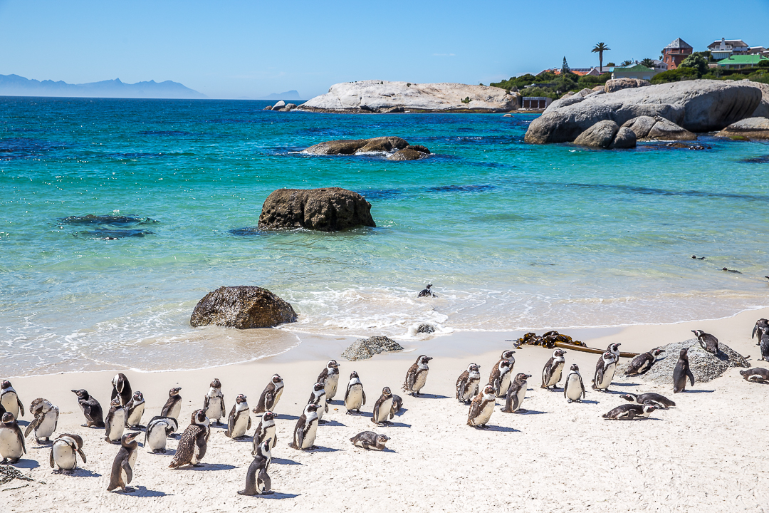 img_4020_cape-town
